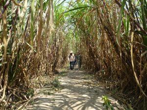 Jalan menuju situs Calon Arang