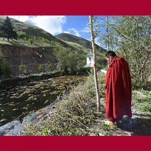 eorang biksu mendo'akan pohon yang baru ditanam