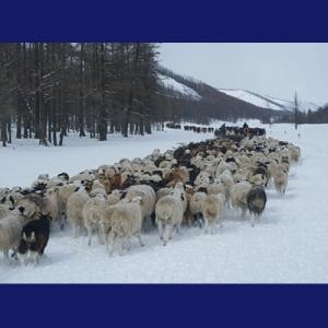 Keluarga Nomad di Mongol