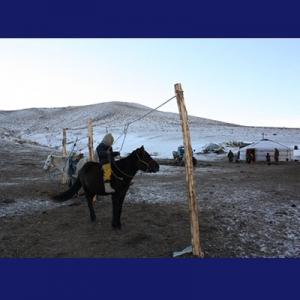Kuda dan ger (tenda bulat nomaden)